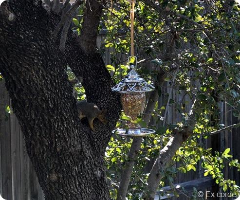 Um esquilo no meu quintal_Ex corde (14)