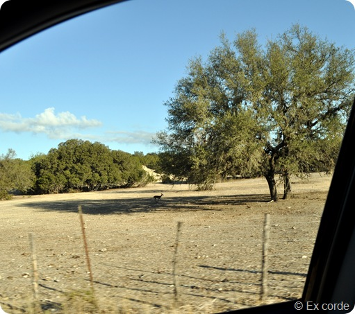 Hike Hill Country State Natural Area_Ex corde (11)